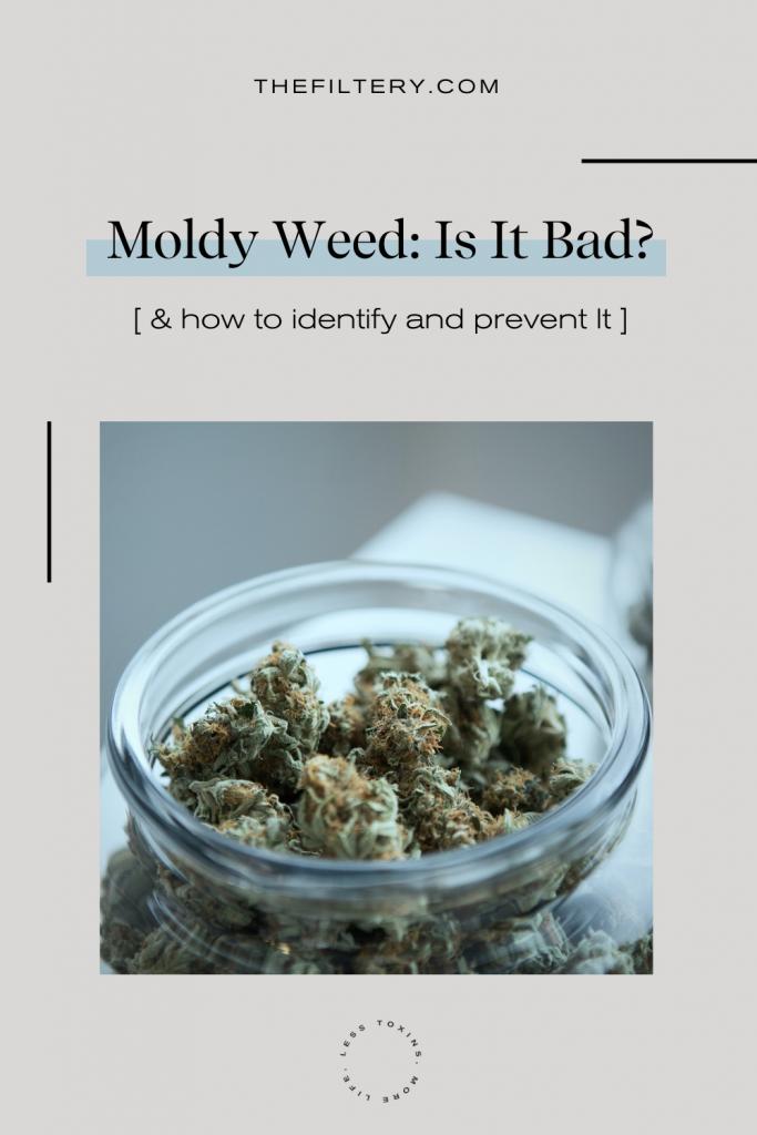 moldy marijuana